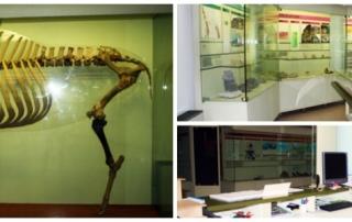 Collage dell'interno del Museo