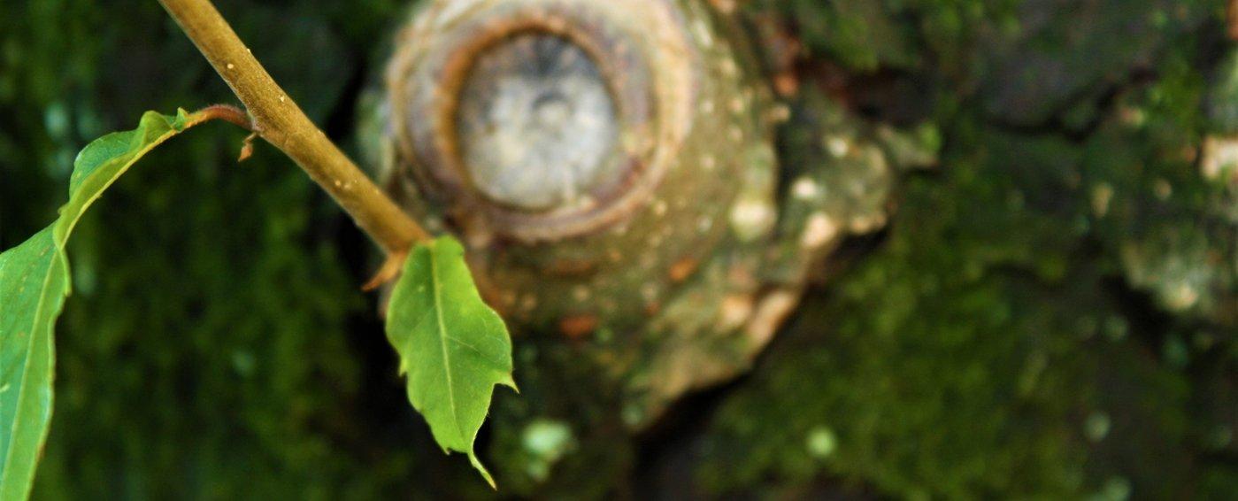 60-per-cento-di-legno-in-meno-1